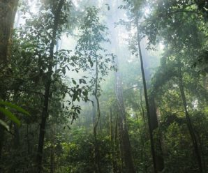 The tropical forest and its biodiversity are disappearing at an alarming rate